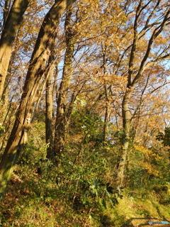 秋深まる_林は憩いの場