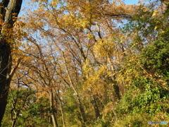 秋深まる_身近な林にて