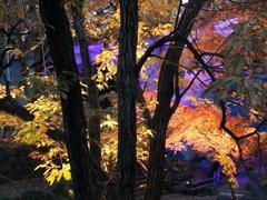 親水公園のライトアップ2