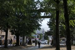 葛飾八幡宮二の鳥居と京成本線