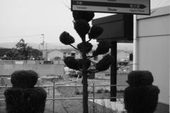 大更(おおぶけ)駅の刈り込まれた植木