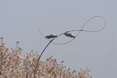 桜とオブジェ