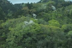 桃源郷への旅~車窓1