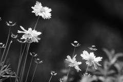 ホームの花壇に咲く花