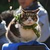 湯島天神にいた猫(去年のものです)