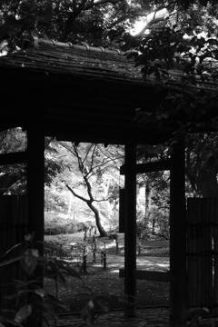 日本庭園の裏門
