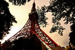 夕映えの東京タワー #1