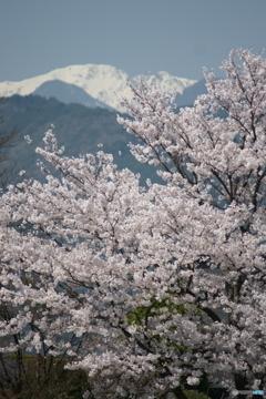 旅先の山々と桜
