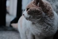 僕が猫を珍しく撮影した日。