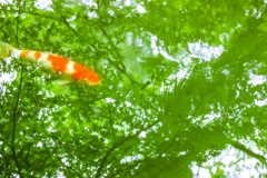 深緑を泳ぐ