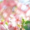 春色の陽射し