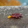 秋深し 6