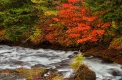 湯川と紅葉