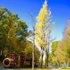 大阪城パークの黄葉