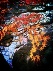 紅葉2 2009 iPhone 3GS