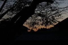 夕焼けと紅葉