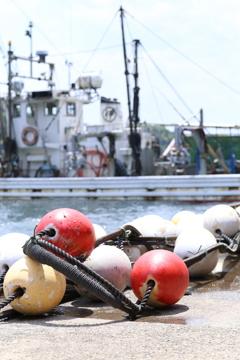 漁港の色彩