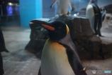 男前ペンギン