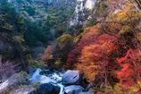 渓流の彩り