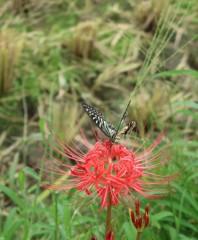風に揺れる花に舞う蝶々