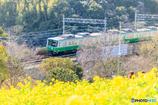 菜の花畑と電車