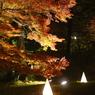 森林公園 紅葉 ライトアップ