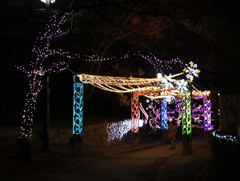 いばらき光の回廊~冬のフェスティバル~2