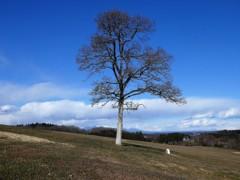農園の一本木