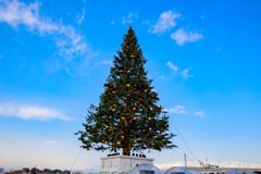 函館のクリスマスツリー1
