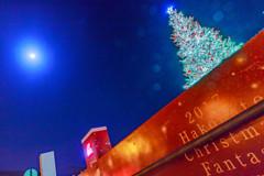 函館のクリスマスツリー3