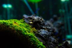 aquarium 緑上の生活者