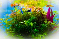 aquarium 水彩