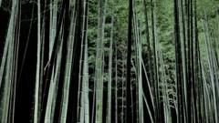 20171209 嵐山ライトアップ