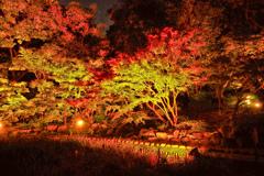 錦を纏う徳川園紅葉祭 2