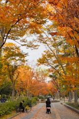 2018 靭公園の秋