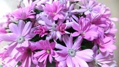 喜びを運ぶ花