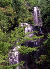 初夏の常清滝