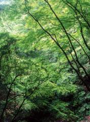 新緑の山野峡