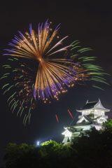 犬山城と花火蝶
