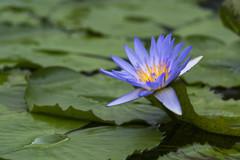 掛川花鳥園の花達-3
