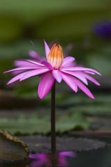 掛川花鳥園の花達-2