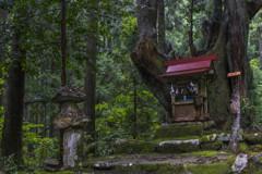 神秘の森の守り神