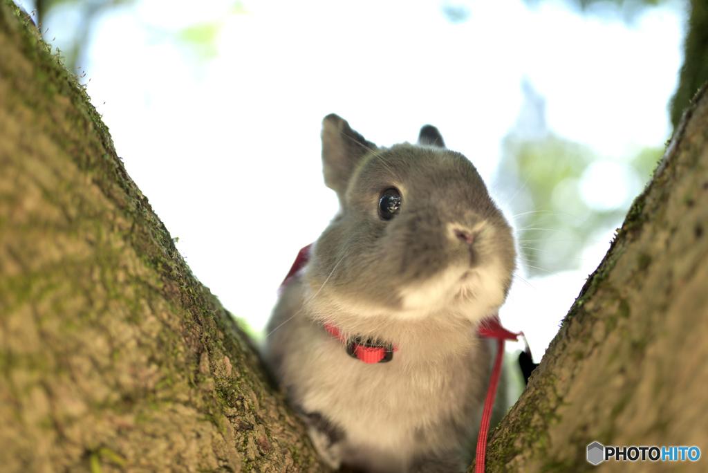 木を登る…フリ!w