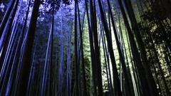 嵐山 竹林(ライトアップ)