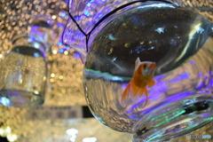 宙に浮く金魚
