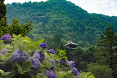 紫陽花寺へ