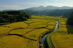収穫間近の田園風景