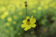 Yellow and bee