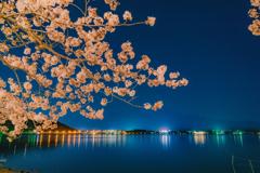 夜景河口湖の水面と映り込みと桜。