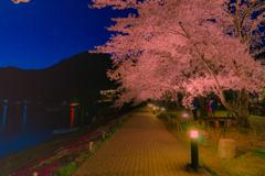 ライトアップ河口湖桜